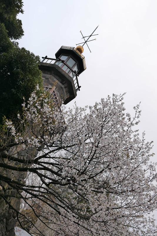 Sakura in full bloom at Chidorigafuchi, Tokyo 01
