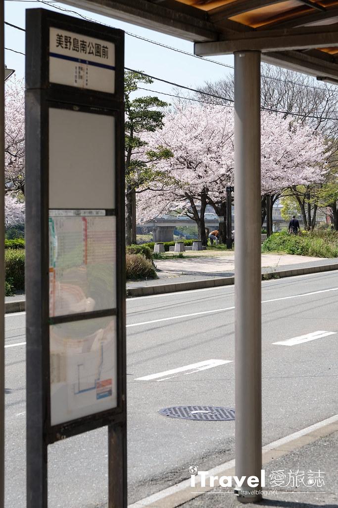 福岡賞櫻景點 美野島南公園 (2)