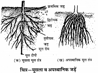RBSE Solutions for Class 9 Science Chapter 8 Vital activities of living 18