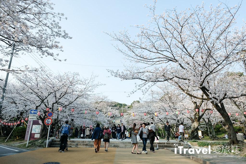 福岡賞櫻景點 西公園Nishi Park (27)