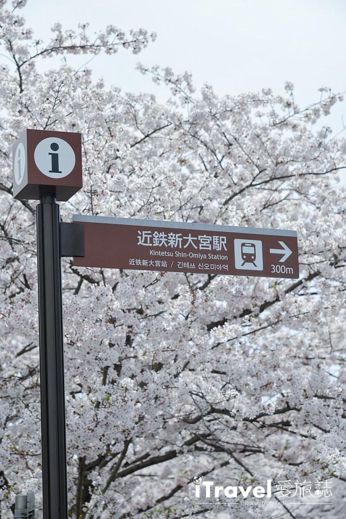 奈良賞櫻景點 奈良佐保川 (3)
