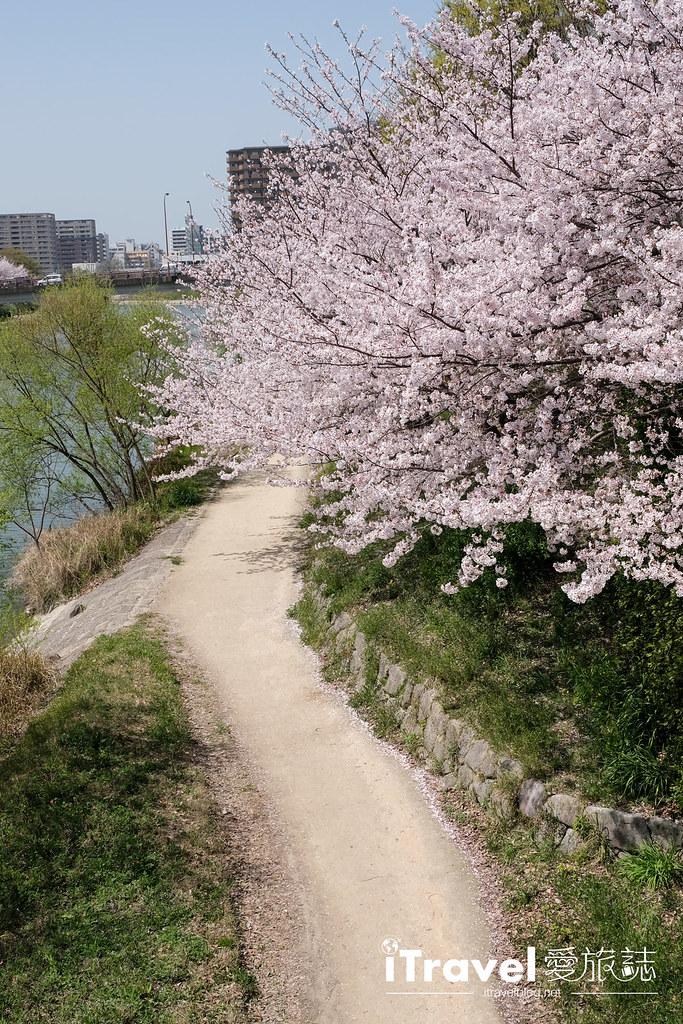 福岡賞櫻景點 美野島南公園 (15)