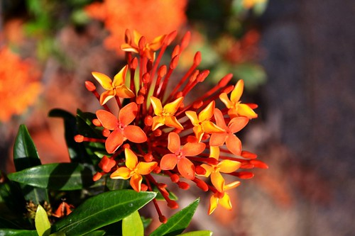 Is Common Flower Any Good? Seven Ways You Can Be Certain | common flower