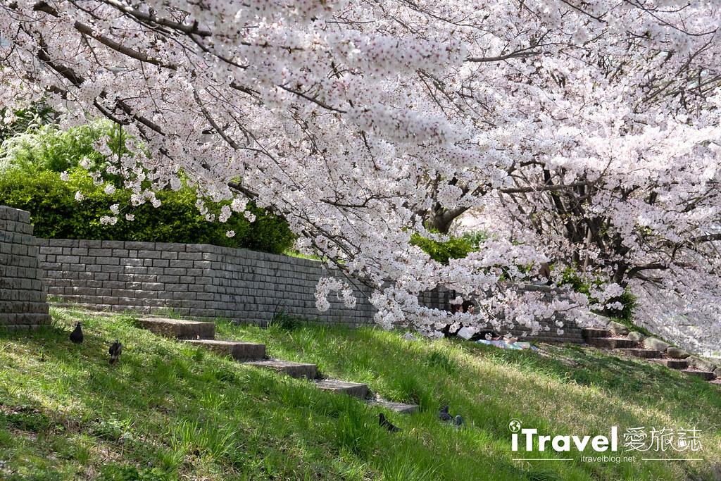 福岡賞櫻景點 美野島南公園 (33)
