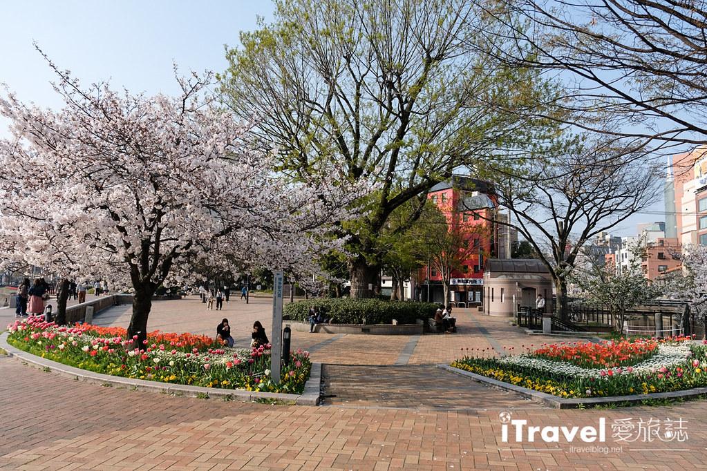 福岡賞櫻景點 博多清流公園 (26)