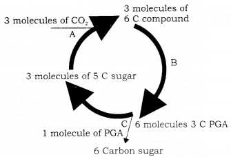 RBSE Solutions for Class 9 Science Chapter 8 Major Activities of Living Organisms 17