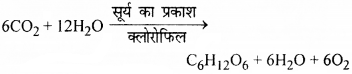 RBSE Solutions for Class 9 Science Chapter 8 Vital activities of living 27