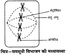 RBSE Solutions for Class 9 Science Chapter 6 Structure of living 6