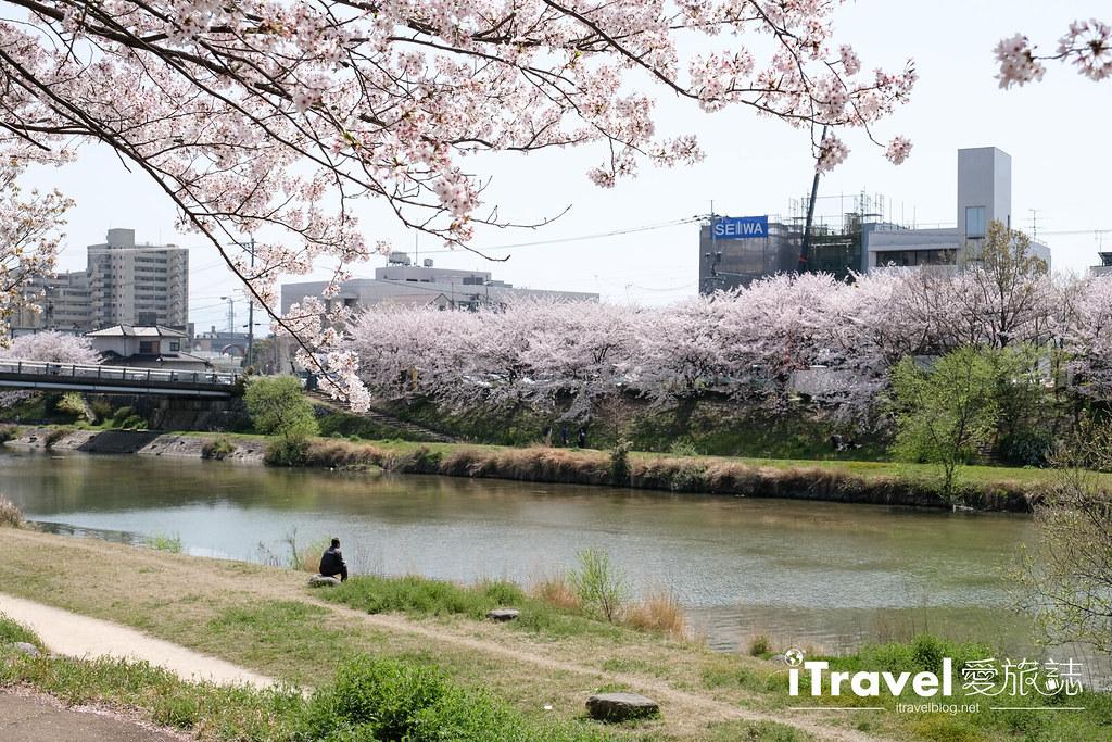 福岡賞櫻景點 美野島南公園 (7)