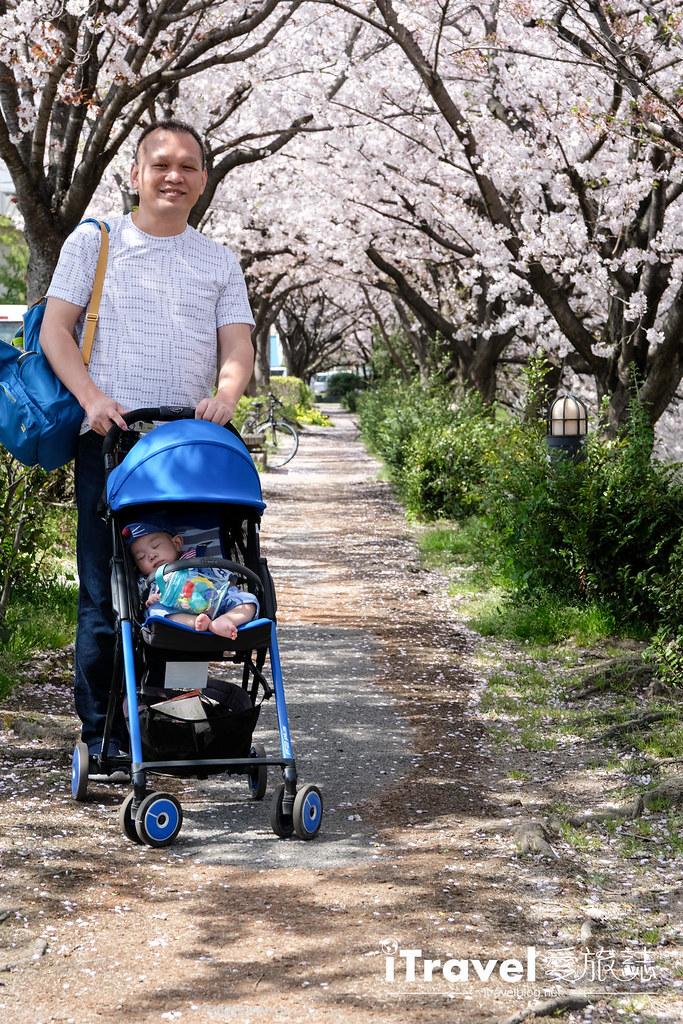 福岡賞櫻景點 美野島南公園 (20)