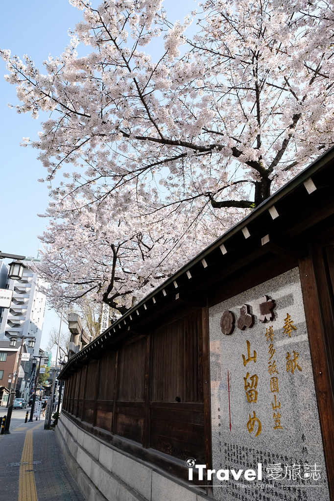 福岡賞櫻景點 櫛田神社 (3)