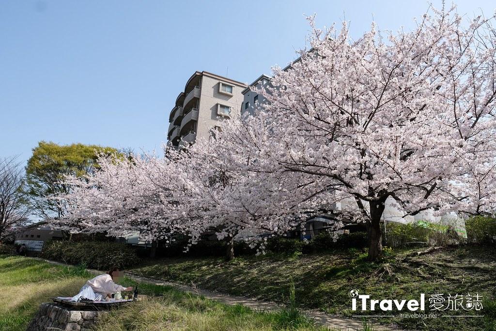 福岡賞櫻景點 美野島南公園 (56)