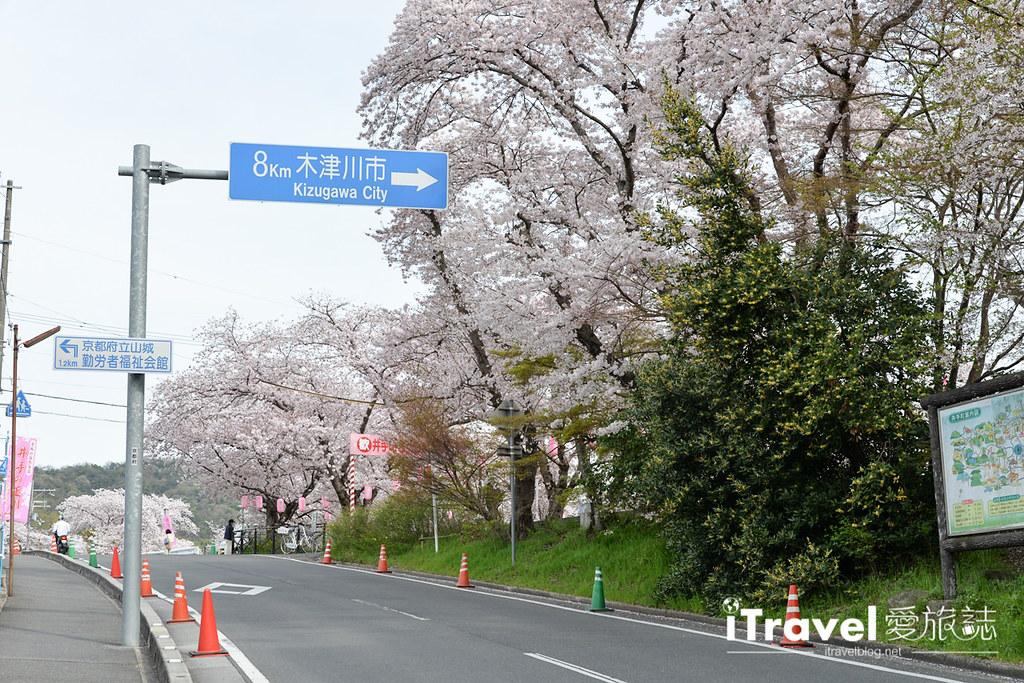 京都賞櫻景點 井手町玉川堤 (48)