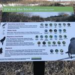 Birds love the Calumet region