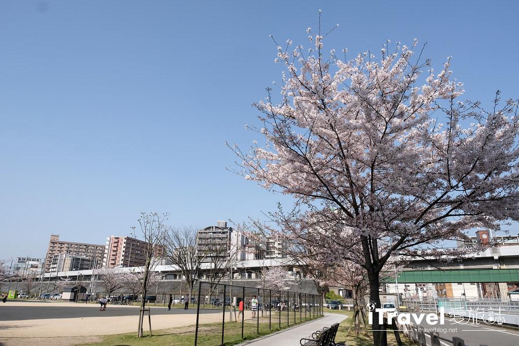 福岡賞櫻景點 美野島公園、東領公園 (26)