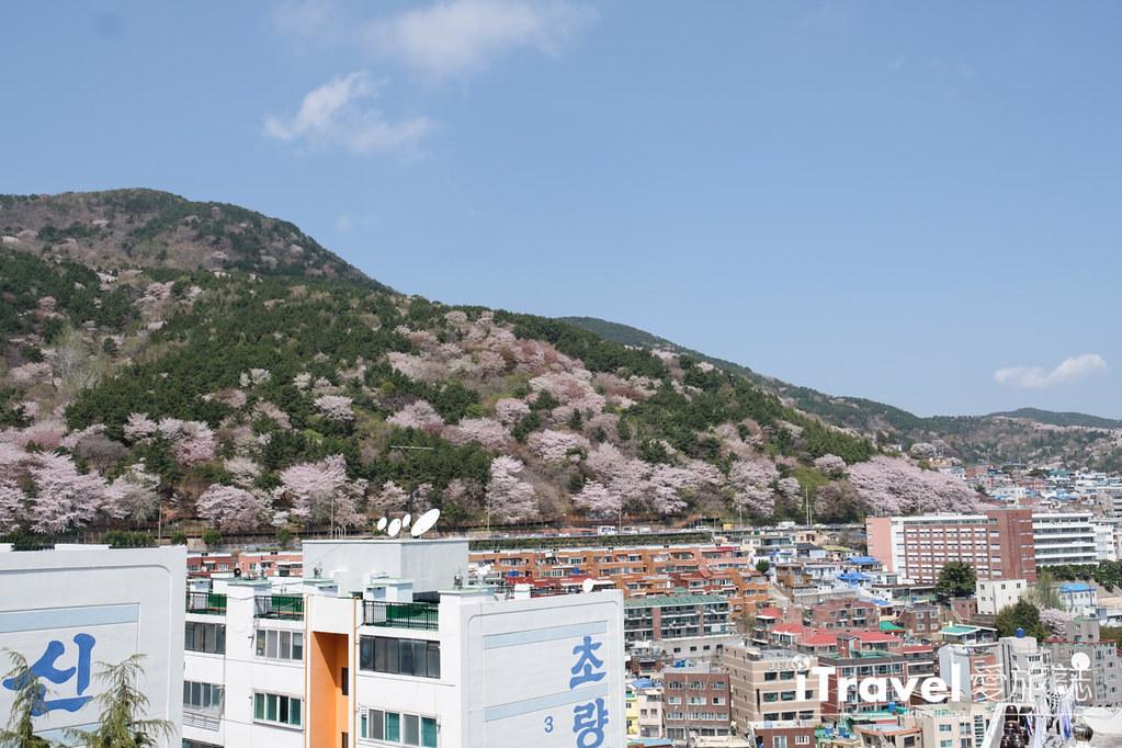 釜山賞櫻景點 東大新洞望洋路 (66)