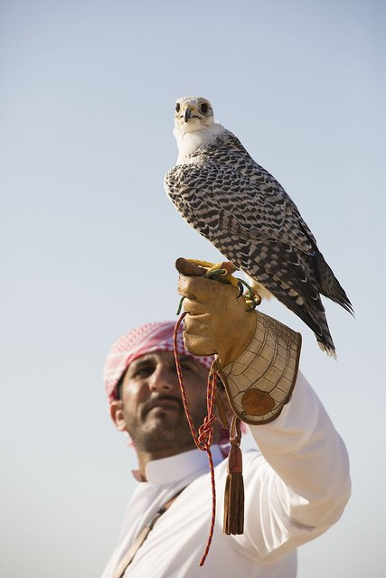 Jumeirah Al Wathba_Falconry 30