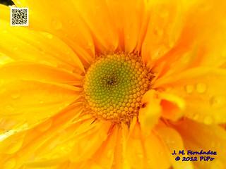Flores 22-10-12