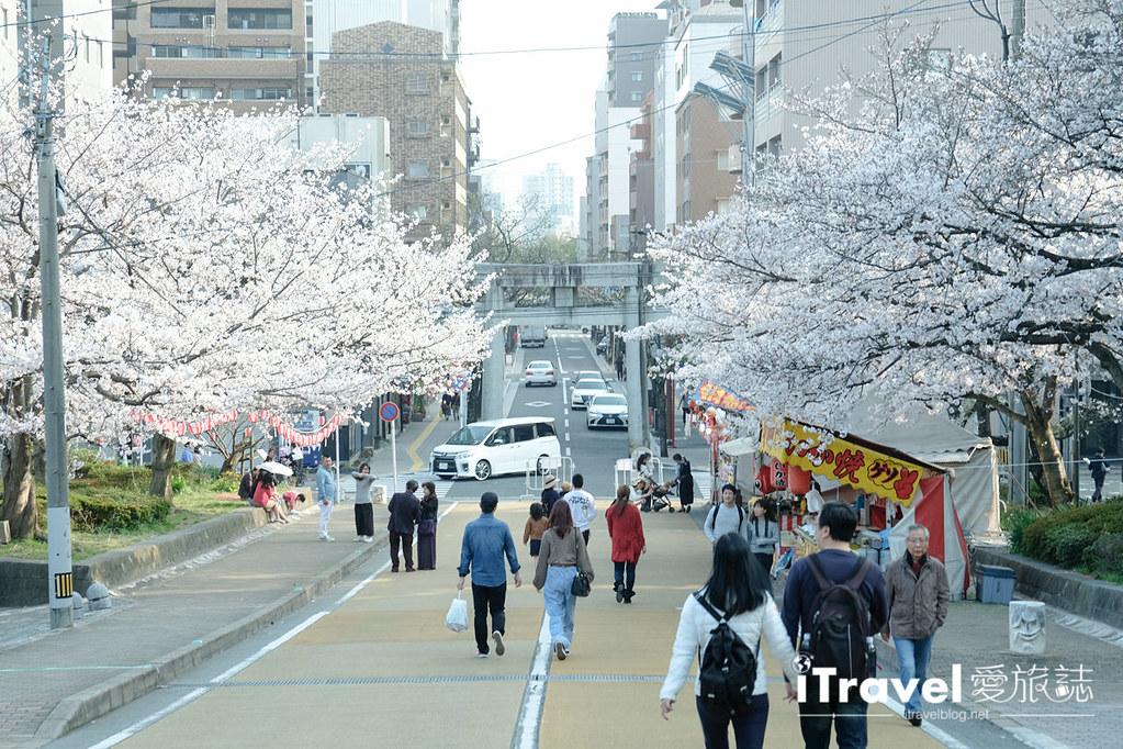 福岡賞櫻景點 西公園Nishi Park (15)