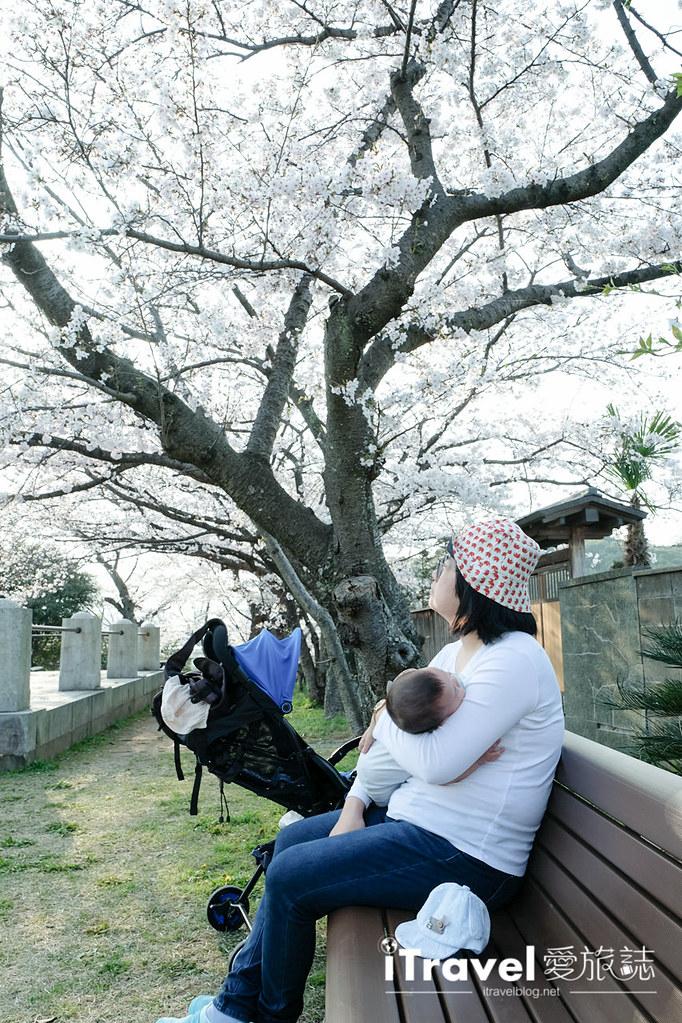 福岡賞櫻景點 西公園Nishi Park (17)