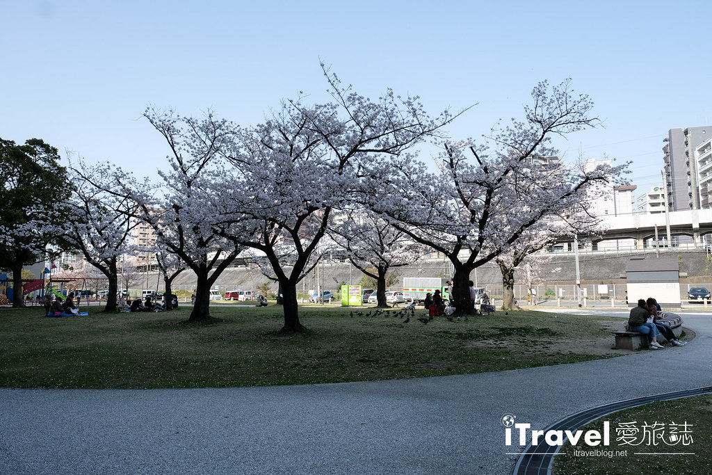 福岡賞櫻景點 美野島公園、東領公園 (29)