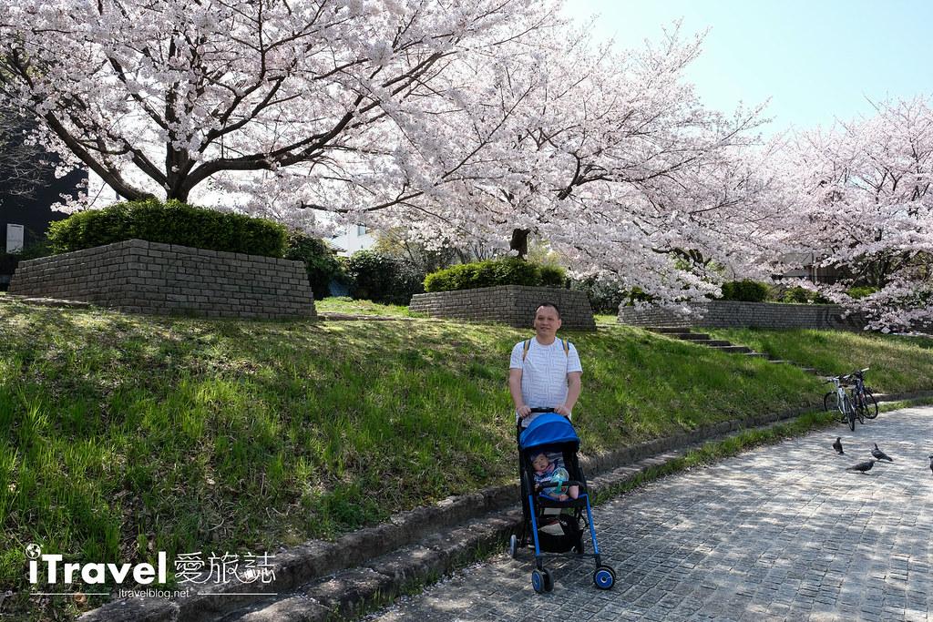 福岡賞櫻景點 美野島南公園 (30)