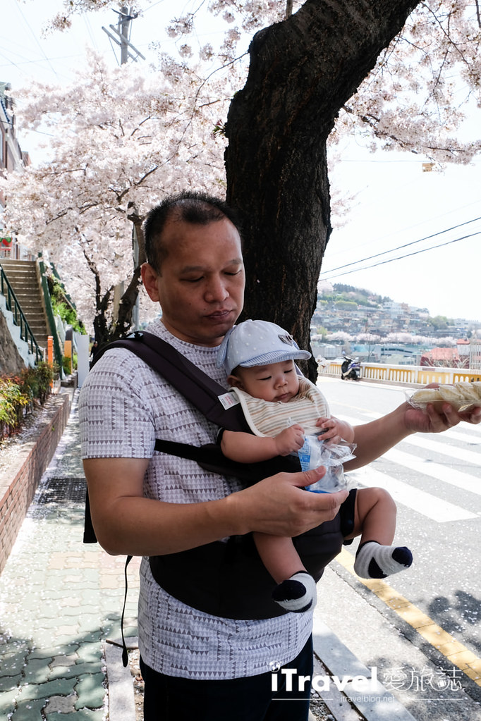 釜山賞櫻景點 東大新洞望洋路 (42)