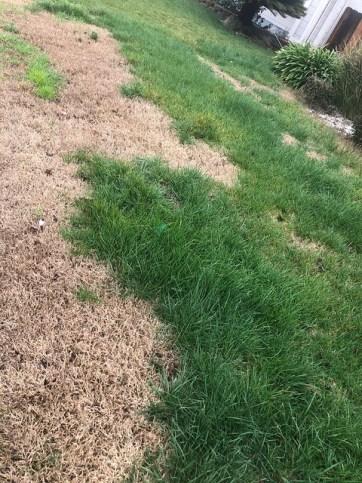 lawn repair near me