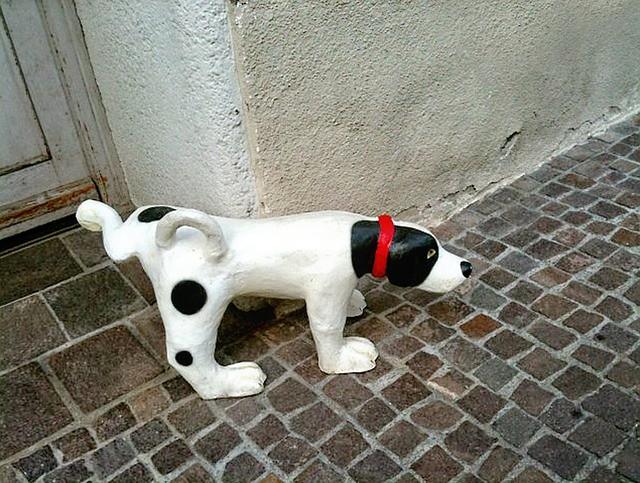 犬の散歩のNGマナーである排泄問題