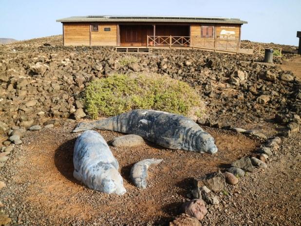Centro de Visitantes de isla de Lobos