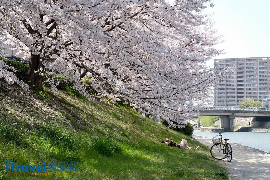 福岡賞櫻景點 美野島南公園 (1)