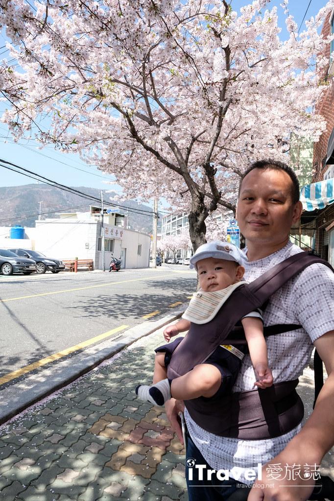 釜山賞櫻景點 東大新洞望洋路 (28)