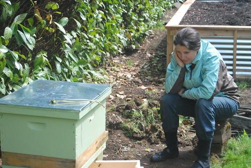 bees, queen, new hive
