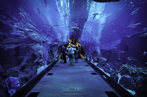 Dubai Aquarium -  M.A.J Photography