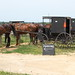 Amish parking, Cashton, 29 June 2012