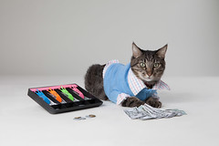 Max the Accountant Cat