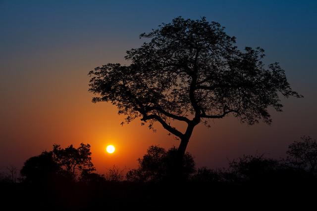 Sunset on the African Savannah