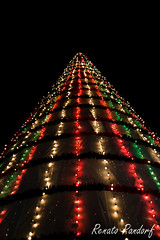 São Bernardo's City Hall Christmas Tree