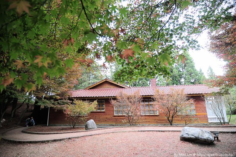 福壽山農場楓紅-6
