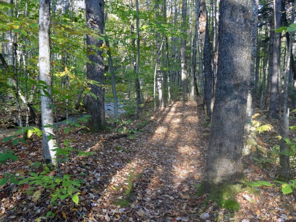 Early Osseo Trail on Mt. Flume