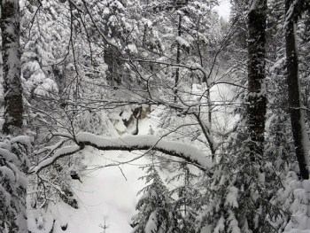 Gibbs Falls in Winter on Mt. Pierce
