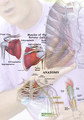 Chest Bone Pain