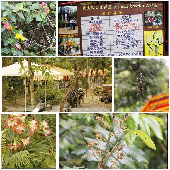 [分享]台灣咖啡原鄉探索之旅~泰武有機咖啡 @VIVIYU小世界