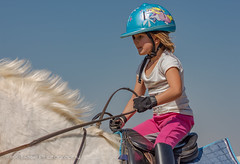 """Crossroads Equestrian Centre • <a style=""""font-size:0.8em;"""" href=""""http://www.flickr.com/photos/67597598@N08/29760761745/"""" target=""""_blank"""">View on Flickr</a>"""