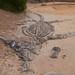 """Excavación simulada de un Plesiosaurio de 12 metros • <a style=""""font-size:0.8em;"""" href=""""http://www.flickr.com/photos/18785454@N00/7445545220/"""" target=""""_blank"""">View on Flickr</a>"""