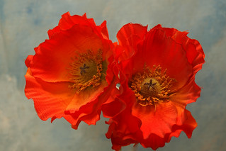 Poppies a la Georgia O'Keefe