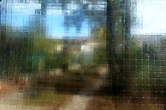 Blur vision of a garden