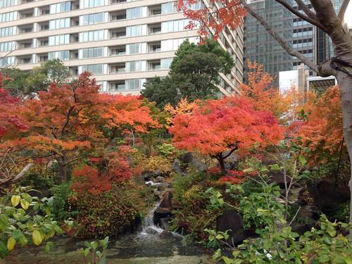 Colored leaves at Hinokicho Park(Tokyo, Japan)