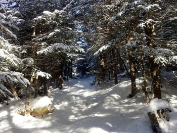 Snow Covered Appalachian Trail on Baldpate Mountain