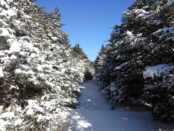 Mt. Moosilauke Carriage Road on the Appalachian Trail in New Hampshire's White Mountains